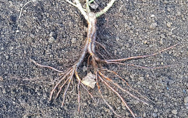 grow-roots-2